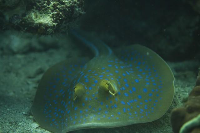 Fish1638